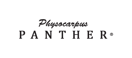 Physocarpus Panther